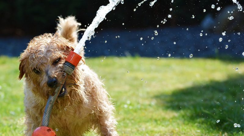 koupel pro psa