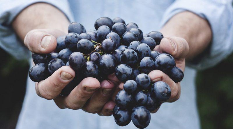 Důvody, proč si dát hroznové víno